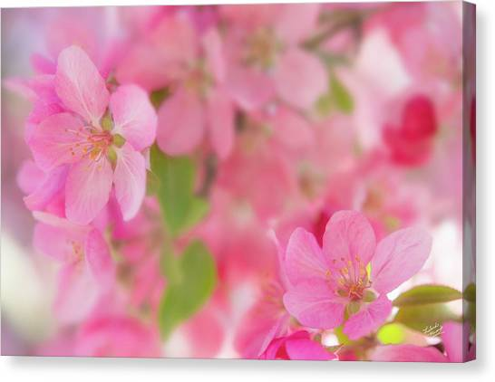Apple Blossom 4 Canvas Print by Leland D Howard