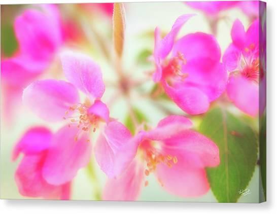 Apple Blossom 6 Canvas Print by Leland D Howard