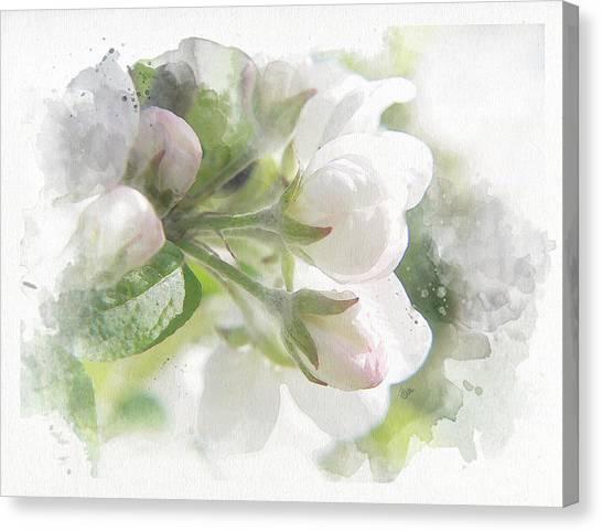 Canvas Print - Apple Blossom by Bitten Kari