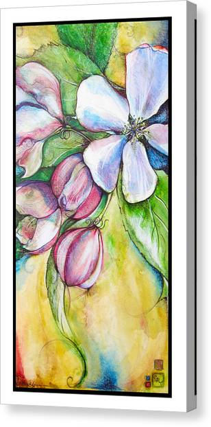 Apple Blossom Canvas Print by Clare Catling