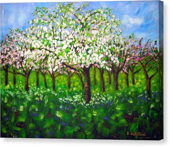 Apple Blossom Orchard Canvas Print
