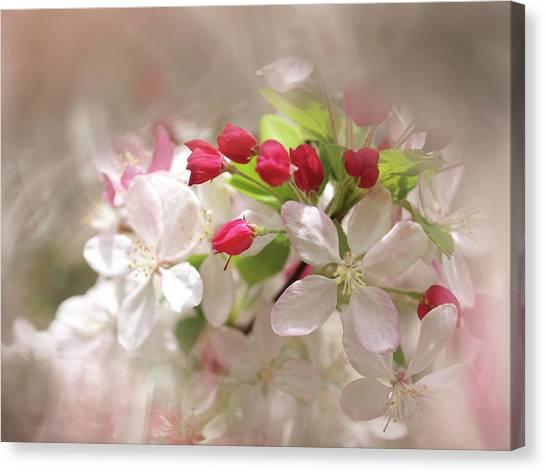 Apple Buds Canvas Print