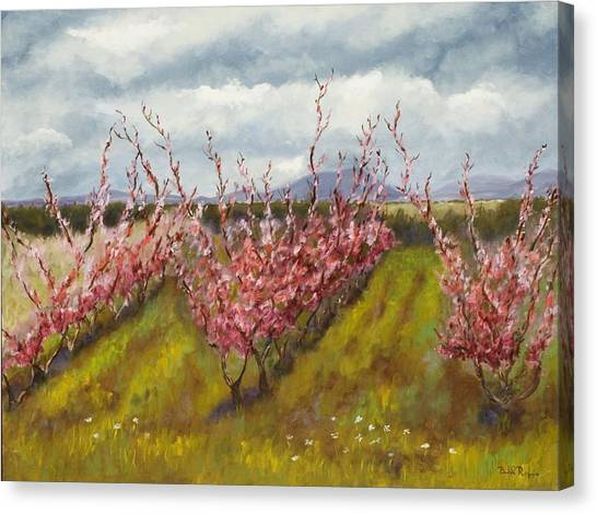 Apple Hill Springtime Canvas Print by Brenda Williams