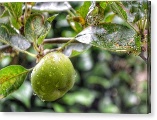 Wild Orchards Canvas Print - Apple In Rain by YoursByShores Isabella Shores