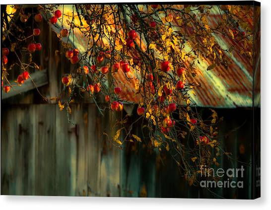Apple Picking Time Canvas Print