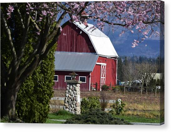 Apple Tree Pink And Barn Red Canvas Print