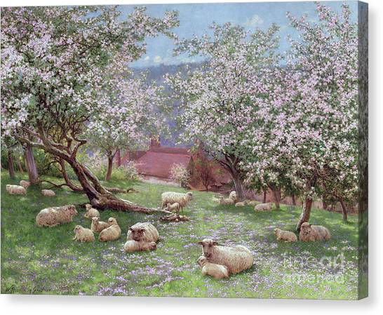 Tree Blossoms Canvas Print - Appleblossom by William Biscombe Gardner