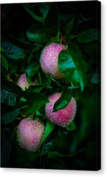 Apples After The Rain Canvas Print
