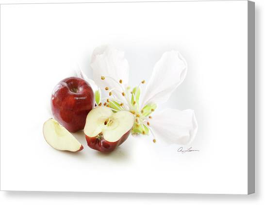 Apples And Blossom Canvas Print