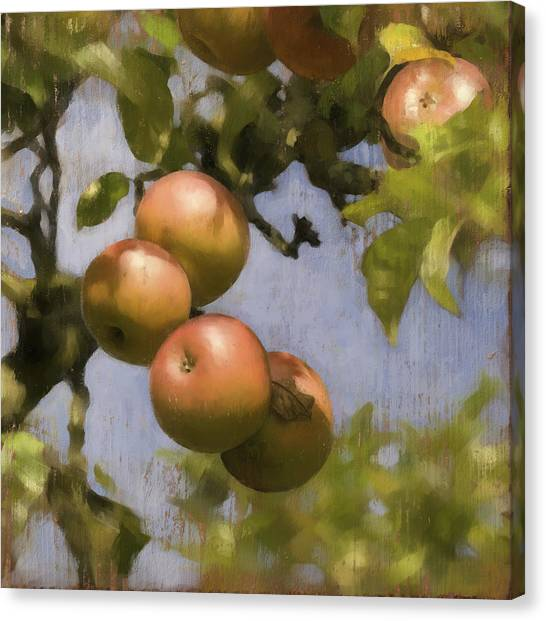 Apples On Wood Panel Canvas Print