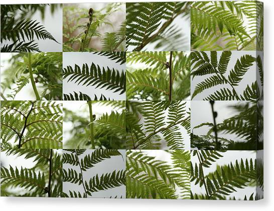 April Ferns 2 Canvas Print