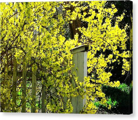 April Gold Canvas Print