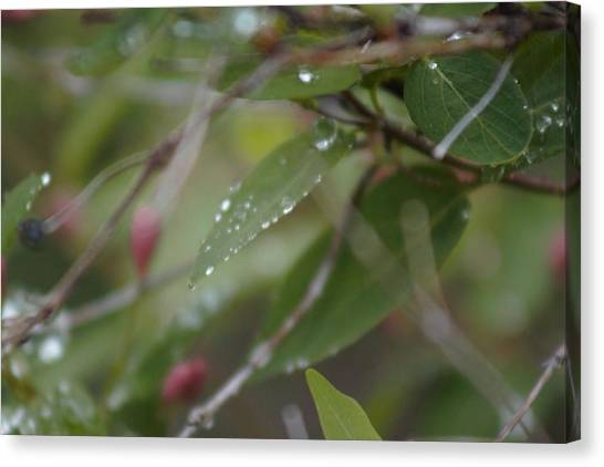 Canvas Print featuring the photograph April Showers 1 by Antonio Romero