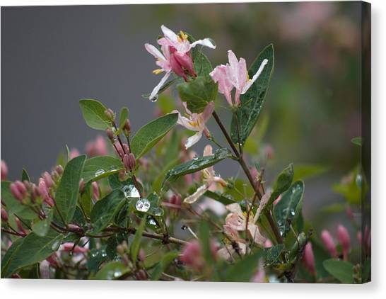 Canvas Print featuring the photograph April Showers 7 by Antonio Romero