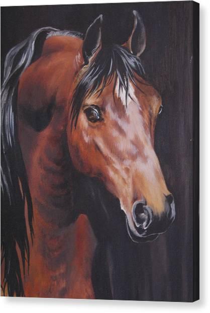 Arabian Horse 1 Canvas Print