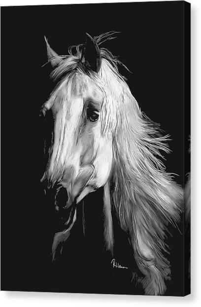 Arabian Canvas Print