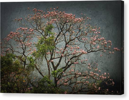 Arandalo Tree Canvas Print by Iris Greenwell