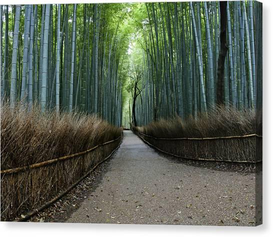Sagano Bamboo Forest Canvas Print - Arashiyama Bamboo Grove by Brian Kamprath