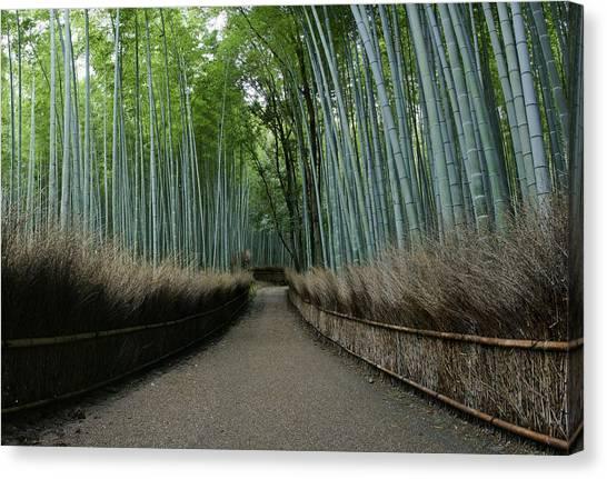 Sagano Bamboo Forest Canvas Print - Arashiyama Bamboo Grove Morning by Brian Kamprath