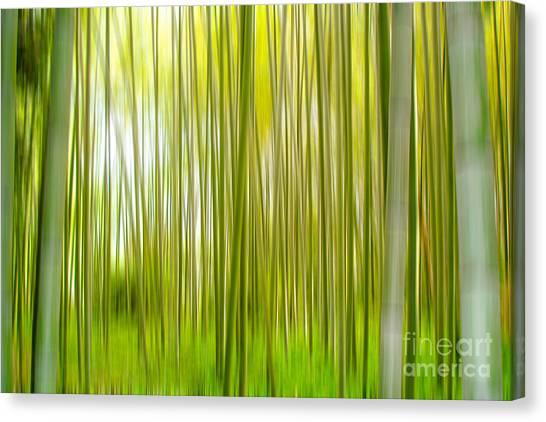 Bamboo Canvas Print - Arashiyama by Delphimages Photo Creations