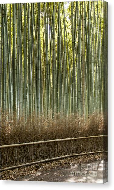 Sagano Bamboo Forest Canvas Print - Arashiyama Mountain Kyoto Japan Famous Landmark For Tourist With Bamboo Forest  by Mariusz Prusaczyk