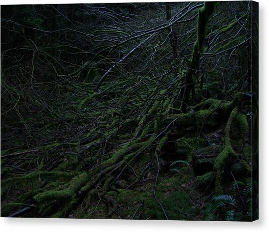 Arboreal Forest Canvas Print by Jim Thomson