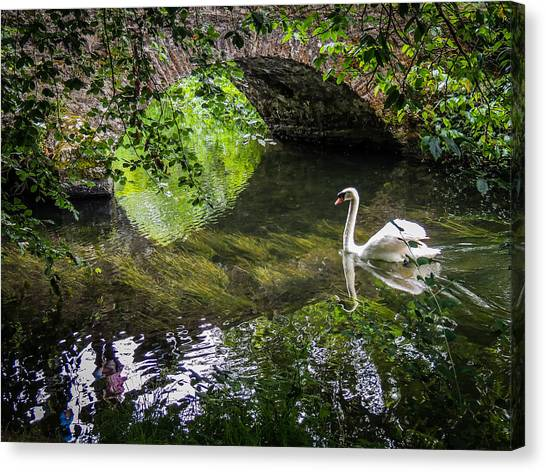 Arched Bridge And Swan At Doneraile Park Canvas Print