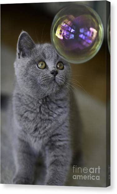 Bubbles Canvas Print - Archie With Bubble by Sheila Smart Fine Art Photography