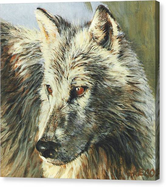 Arctic Wolf Canvas Print by Steve Greco