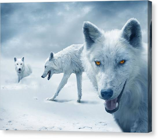 Canvas Print - Arctic Wolves by Mal Bray