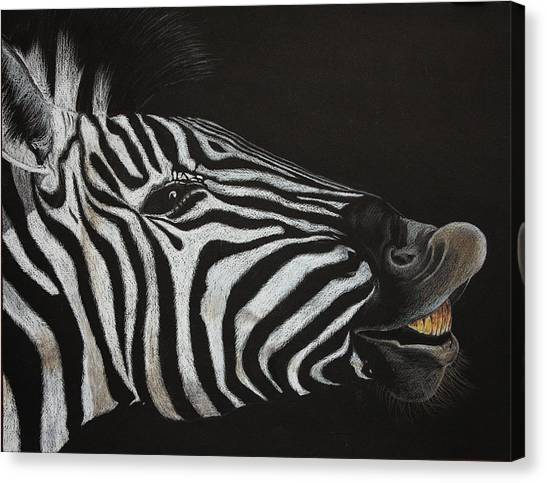 Are My Teeth Clean Yet Canvas Print by Don MacCarthy