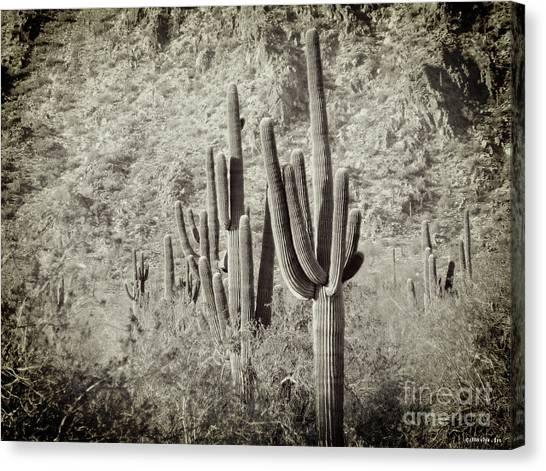 Arizona Desert 2 Canvas Print