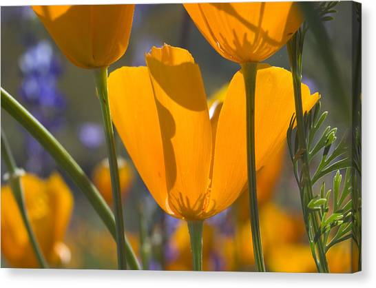 Arizona Spring Color Canvas Print