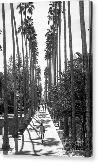 Pac 12 Canvas Print - Arizona State University Palm Walk by University Icons