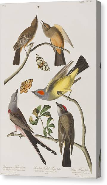 Flycatchers Canvas Print - Arkansaw Flycatcher Swallow-tailed Flycatcher Says Flycatcher by John James Audubon
