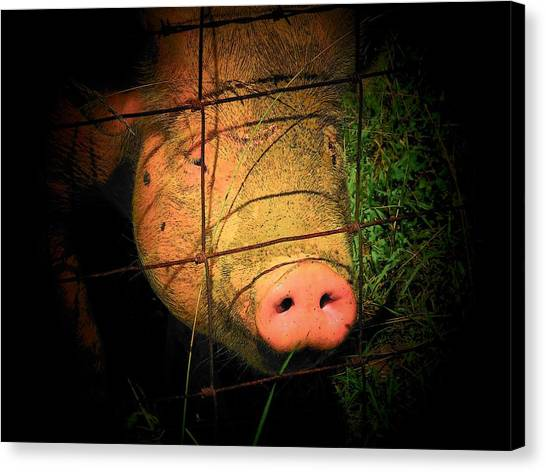 Pig Farms Canvas Print - Arnold by Michael L Kimble