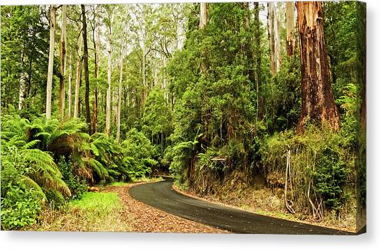 Great Otway National Park Canvas Print - Around The Bend by Catherine Reading