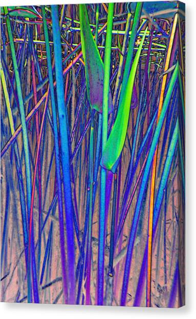 Arrow Reeds Canvas Print by Georgia Bassen