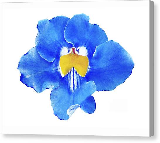 Art Blue Beauty Canvas Print