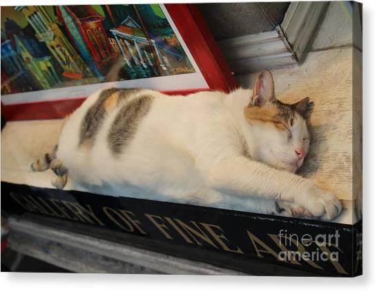 Gumbo Canvas Print - Art Gallery Cat Sleeping  by Chuck Kuhn