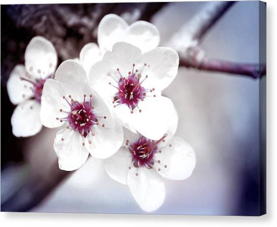 Art Of Spring Canvas Print