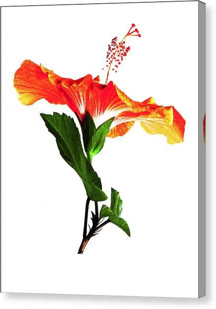 Art Orange Canvas Print