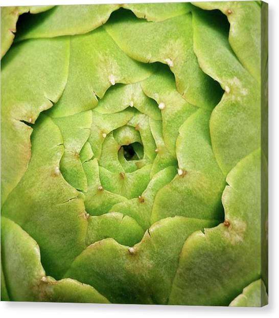 Artichoke Canvas Print - Artful Artichoke.  #artichoke #flower by The Texturologist