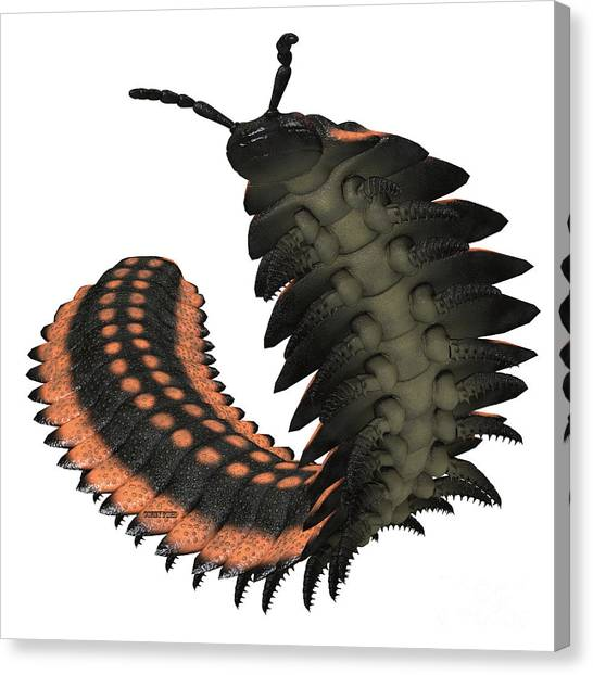Centipedes Canvas Print - Arthropleura On White by Corey Ford