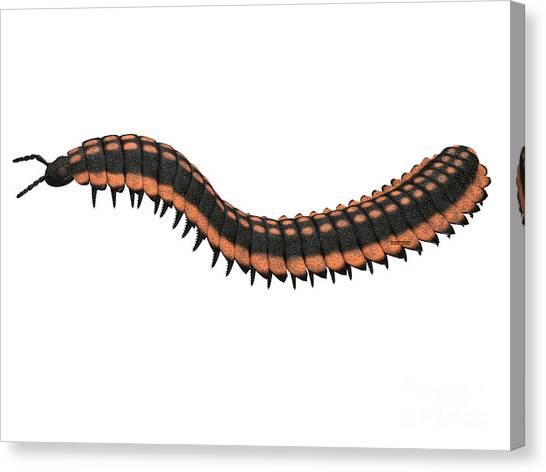 Centipedes Canvas Print - Arthropleura Side Profile by Corey Ford