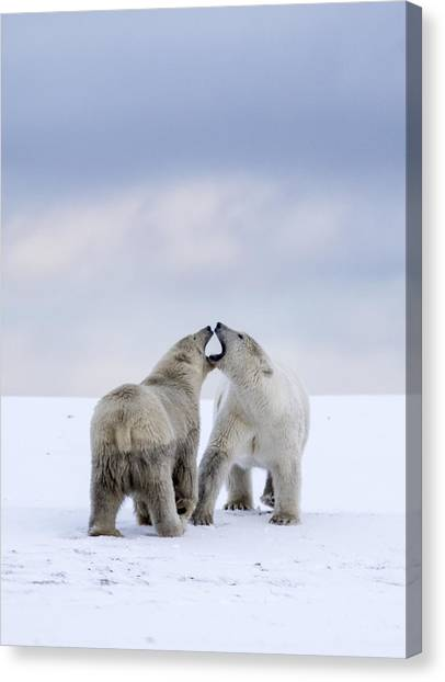 Artic Antics Canvas Print