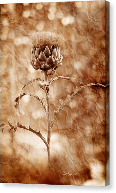 Artichoke Canvas Print - Artichoke Bloom by La Rae  Roberts