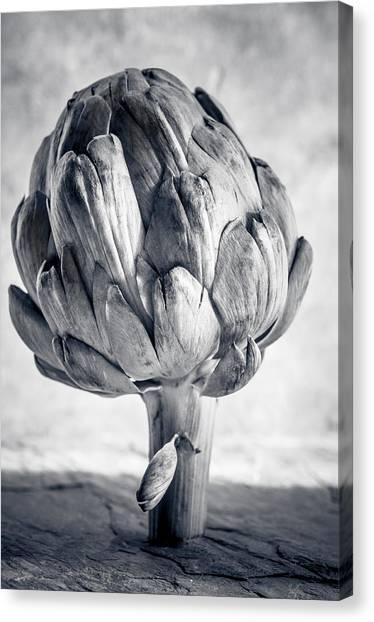 Artichoke Canvas Print - Artichoke by Maggie Terlecki