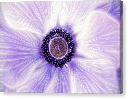 Artistic Poppy Anemone Canvas Print