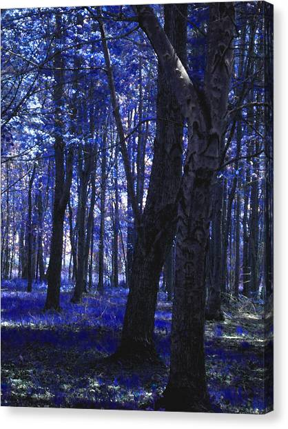 Canvas Print featuring the photograph Artistic Tree In Blue by Michelle Audas